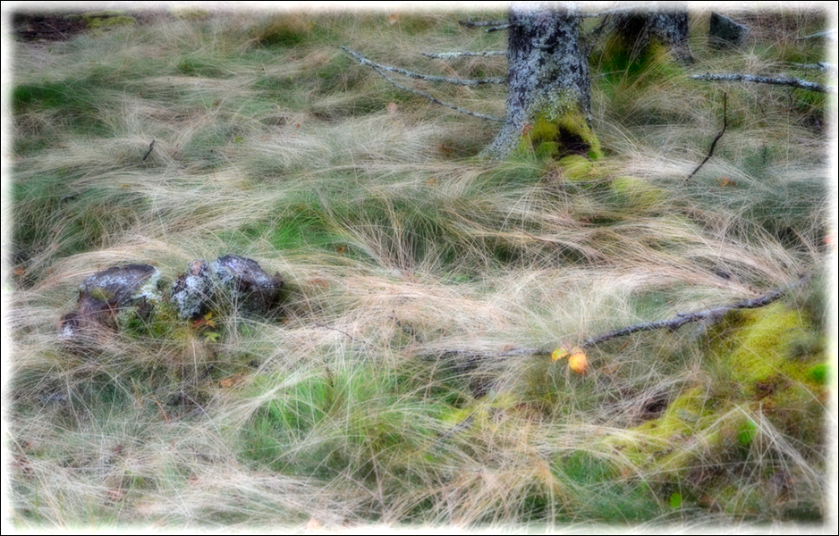 Grasses ANP
