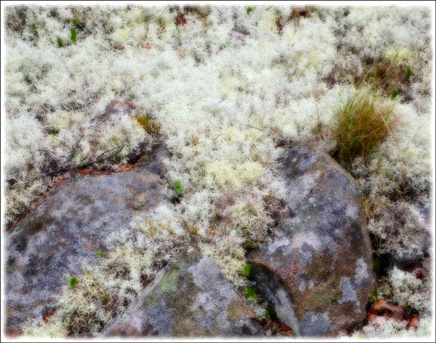 wp-lichenrock-anp_1830-7x9-strk-2