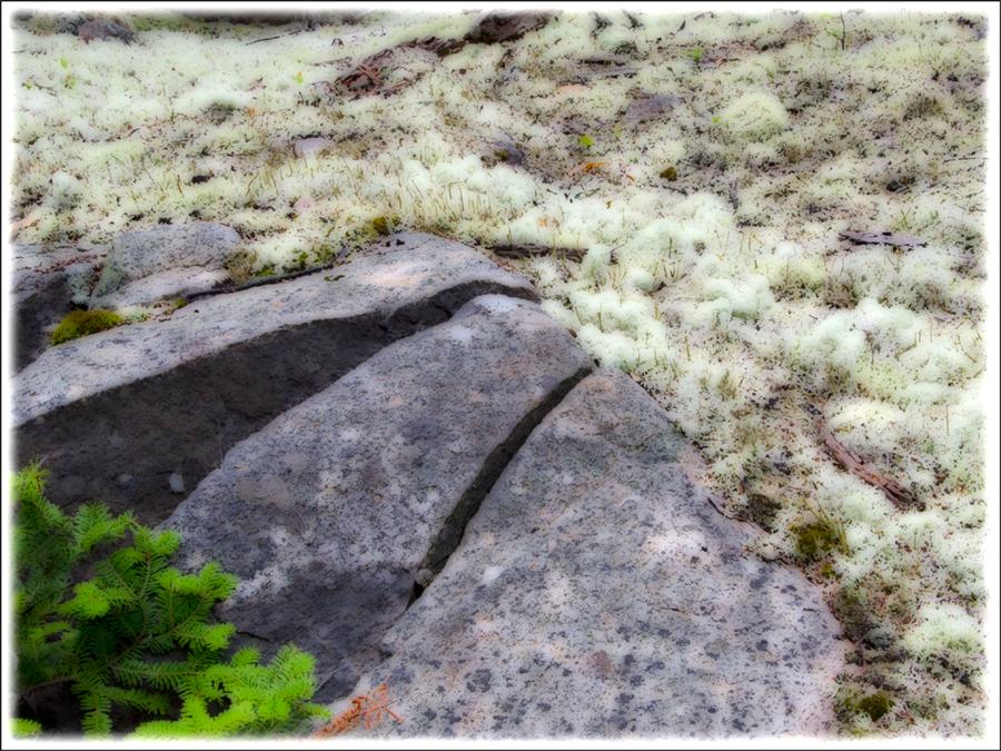 wp-lichenrock-anp_2832-7x9-strk-2